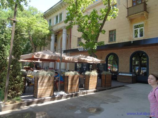 Black Bear - Tashkent